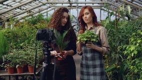 De populaire bloggerseigenaars van serre registreren video over pottenbloemen met camera Vele groene installaties in pottenang stock videobeelden