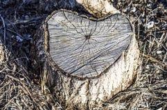 De populierbomen van de bodem worden gesneden, snijden boompatronen dat stock afbeelding