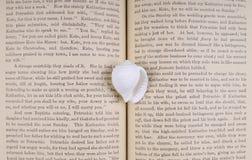 De porceleinslak van de schat op het boek Royalty-vrije Stock Afbeeldingen
