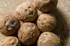 De poriën van de kokosnotengerminatie Stock Afbeeldingen