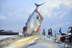 De portiers laden in het algemeen tonijn op vrachtwagen aan de stad van Santos van de zeevruchtenfabriek stock afbeelding