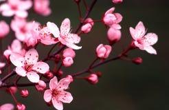De portretten van de lente royalty-vrije stock foto's