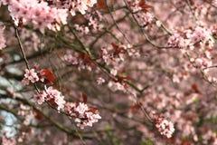 De portretten van de lente stock afbeeldingen