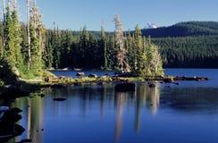 De portretten van Oregon stock foto's