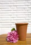 De pot van de bloem Royalty-vrije Stock Afbeeldingen