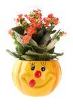 De pot van de bloem Stock Foto's