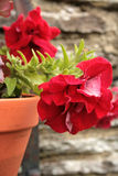 De pot van de bloem Stock Foto