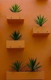 De Pot van de bloem op de muur. Stock Afbeeldingen