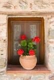 De pot van de bloem in venster Royalty-vrije Stock Foto