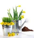 De pot van de tuin met gras, madeliefjes en gieter Stock Foto