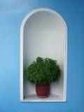 De Pot van het basilicum - Andros, Griekenland Stock Foto's