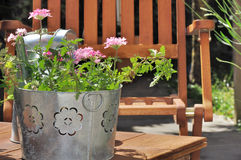 De pot van het ijzerkruid op een terras Stock Foto