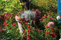 De pot van de terracottabloem onder de bloemen Royalty-vrije Stock Fotografie
