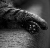 De poten van de kat Stock Foto's