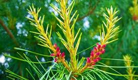 De potenkerstbomen zijn verfraaid met heldere kleurrijke knoppen, een mooi net bos royalty-vrije stock afbeeldingen