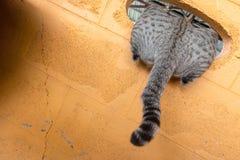 de pothuisdier van het kattenkatje stock fotografie