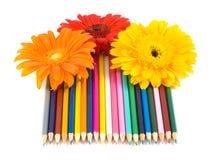 De potloden en de bloem van de kleur royalty-vrije stock afbeelding
