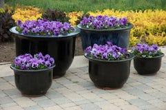 De Potten van de bloem stock afbeeldingen