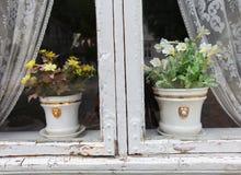 De potten van de bloem in het venster met gordijnen stock afbeelding
