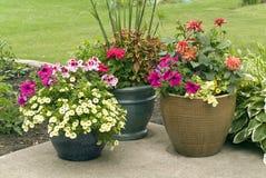 De potten van de bloem met bloeiende bloemen Stock Afbeeldingen