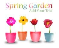 De Potten van de Bloem van de lente op Wit Stock Foto