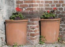 De potten van de geranium stock afbeelding