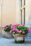 De potten van de hydrangea hortensia Royalty-vrije Stock Afbeeldingen