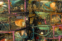 De Potten van de krab Royalty-vrije Stock Afbeeldingen