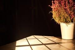 De pottenbloem die onm de lijst wordt geplaatst in de donkere ruimte Royalty-vrije Stock Foto's