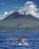 Potvis voor vulkaan Stock Foto's