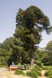 De Powerscourt-Waterval, dichtbij Enniskerry royalty-vrije stock afbeelding