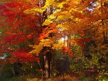 De Pracht van de herfst Stock Afbeeldingen