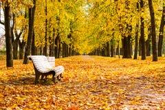 De prachtige herfst Stock Afbeelding