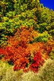 De prachtige herfst in het bos Stock Foto