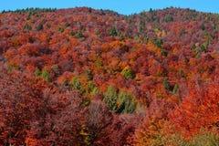 De prachtige kleuren van de bossen in de herfst, in de bergen, die op de sneeuw wachten royalty-vrije stock afbeelding