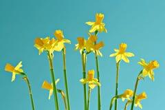 De prachtige lente royalty-vrije stock afbeeldingen
