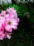 De prachtige lente Stock Foto