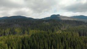 De prachtige natuurlijke schoonheid van het bergachtige landschap Bij de bovenkant kunt u de lege ruimte met vernietigde bomen zi stock videobeelden