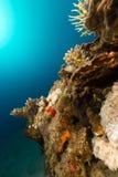 De prachtige onderwaterwereld van het Rode Overzees royalty-vrije stock afbeeldingen