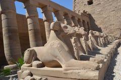 Tempel van amon-Ra van de God van de Zon Royalty-vrije Stock Foto's
