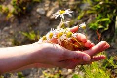 De prachtige de zomerbloemen omhelst door de tedere handen van een jong meisje Helder het glanzen zondalingen op zachte handen en Stock Afbeelding