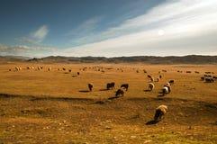 De prairie in de herfst Royalty-vrije Stock Afbeelding