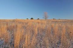 De Prairie van de winter stock afbeelding