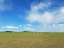 De Prairie van Hulunbuir royalty-vrije stock afbeelding
