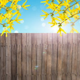 De prentbriefkaar met de verse lente bloeit forsythia en lege plaats FO Royalty-vrije Stock Foto's
