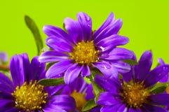 De prentbriefkaar van de bloem Royalty-vrije Stock Foto's