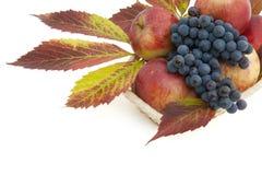 De prentbriefkaar van de herfst met appelen en druiven Stock Afbeeldingen