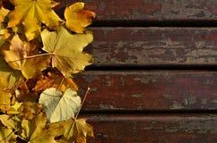 De prentbriefkaar van de herfst Rood - gele esdoornbladeren en gele aartjes Stock Afbeelding