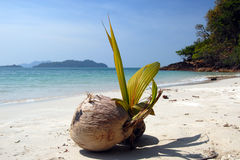 De prentbriefkaar van de kokosnoot Royalty-vrije Stock Afbeeldingen