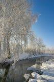 De prentbriefkaar van de winter. Zonnige boom die in rivier wordt weerspiegeld stock afbeelding